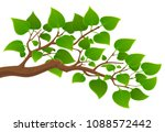 branch of a tree with green... | Shutterstock .eps vector #1088572442
