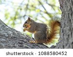 Spring Squirrel   A Little...