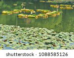 green leaves of lotus in the... | Shutterstock . vector #1088585126