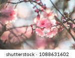 spring branch with pink flowers ... | Shutterstock . vector #1088631602