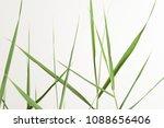 wooden tropic background  | Shutterstock . vector #1088656406