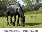 Black Horse In The Meadow