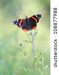 Red Admiral Butterfly   Vanessa ...