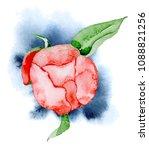 watercolor red peony flower ...   Shutterstock . vector #1088821256