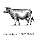 cow hand drawn in elegant... | Shutterstock .eps vector #1088930348