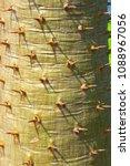 cactus grown as ornamental... | Shutterstock . vector #1088967056