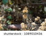 dry flower by the way | Shutterstock . vector #1089010436