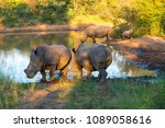 three adult and a youngster... | Shutterstock . vector #1089058616