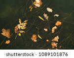 seaweed and flecked leaves on... | Shutterstock . vector #1089101876