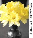 Small photo of Closeup macro photograph of yellow daffodil flowers in a vase sitting on a dining table with all other colors made unsaturated with natural light.