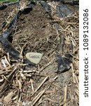 "Small photo of A rock with ""GARLIC"" written on it, used as a marker in a garden to identify the crop"