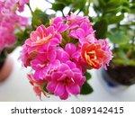 blooming of spring flowers | Shutterstock . vector #1089142415