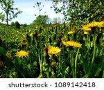blooming of spring flowers | Shutterstock . vector #1089142418