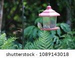 chickadee titmouse songbird...   Shutterstock . vector #1089143018