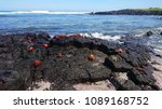 Colourful Sea Crabs On The...
