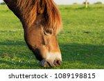 Close Up Of A Pony        S...