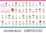 tulip varieties flat icon set.... | Shutterstock .eps vector #1089251132