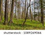forest spring city | Shutterstock . vector #1089269066