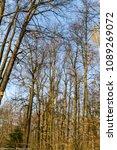forest spring city | Shutterstock . vector #1089269072