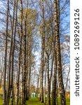 forest spring city | Shutterstock . vector #1089269126