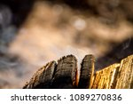 smoke bonfire trees | Shutterstock . vector #1089270836