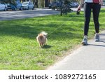 the dog going with owner in... | Shutterstock . vector #1089272165