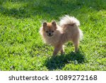 the dog going with owner in... | Shutterstock . vector #1089272168