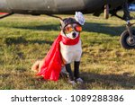 funny photo of the akita inu... | Shutterstock . vector #1089288386