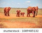 family of african bush... | Shutterstock . vector #1089485132
