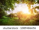 apple garden at sunset  or...   Shutterstock . vector #1089486656