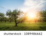 apple garden at sunset  or...   Shutterstock . vector #1089486662