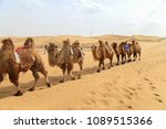 camels in the desert. kubuqi... | Shutterstock . vector #1089515366