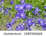 Bouquet Of Field Violet Flowers