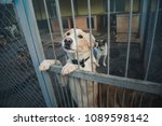 lonely homeless dog is sitting... | Shutterstock . vector #1089598142