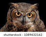 a wild great horned owl in... | Shutterstock . vector #1089632162