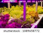 growing vegetables using led... | Shutterstock . vector #1089658772