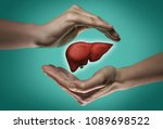 A Human Liver Between Two Palm...
