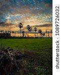 sugar palm tree in twilight | Shutterstock . vector #1089726032