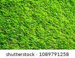 background of green leaves on... | Shutterstock . vector #1089791258