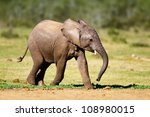 Stock photo baby elephant running addo national park 108980015