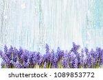 Spring Background. Blue Muscar...