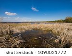 Small photo of coast of the Kiev sea on a sunny spring day with dry grass and reeds