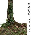 epiphytic ferns  bird's nest... | Shutterstock . vector #1090055492