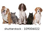 Stock photo group of cats and dogs in front of white background 109006022