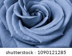 Blue Rose Petals Close Up