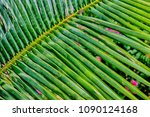 palm leaves. sunny day. blue...   Shutterstock . vector #1090124168