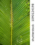 palm leaves. sunny day. blue...   Shutterstock . vector #1090124198