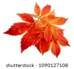 Red Grape Leaves Isolated On...