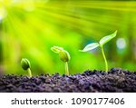 seed plants are growing.they... | Shutterstock . vector #1090177406