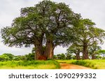 Majestic Baobab Trees Tower...
